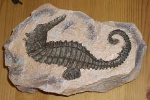 fossil rocks